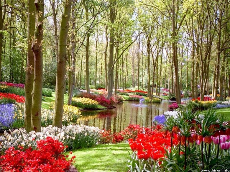 garden-and-flowers-and-trees