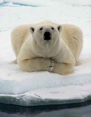 polarbear77
