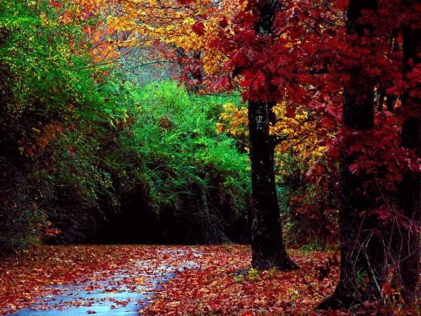 Φθινοπωρινή Ευλογία