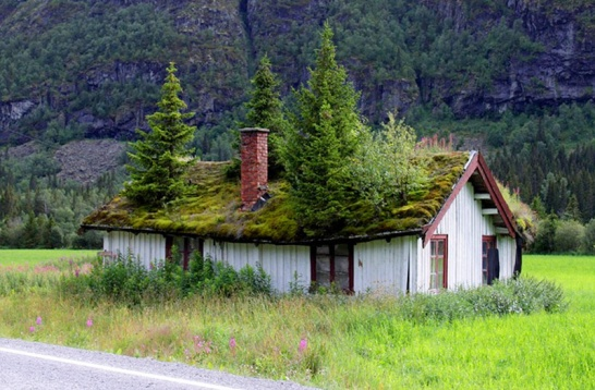 473983-NorweigenGreenRoofs