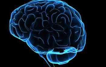 braincomp (1)