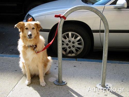 dog-tethered