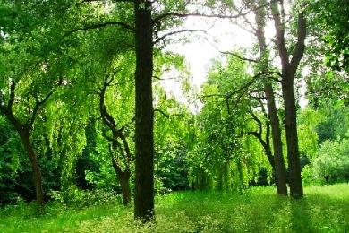 fotosynthesi-biokausima-itia-94863