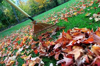 leaves-autumnbeu