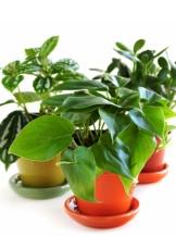 plants_386_107074