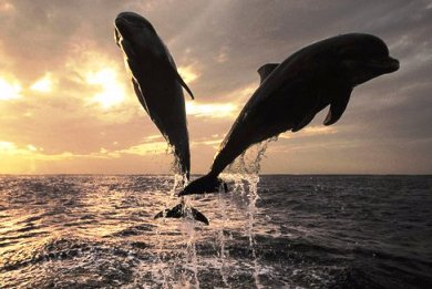 delfinia-uperoxa-thilastika