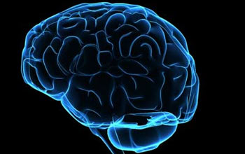 brain350
