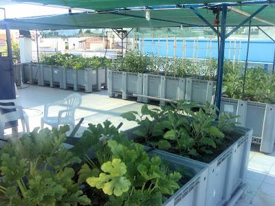 Καλλιέργεια καλοκαιρινών λαχανικών σε ταράτσα