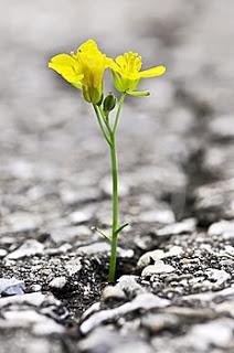 λουλούδι ελπίδα