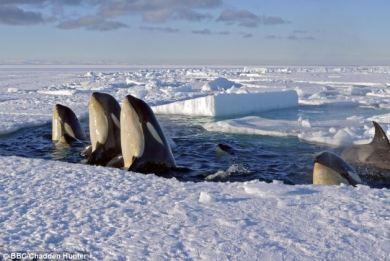 pagetwnes-antarktiki-98090